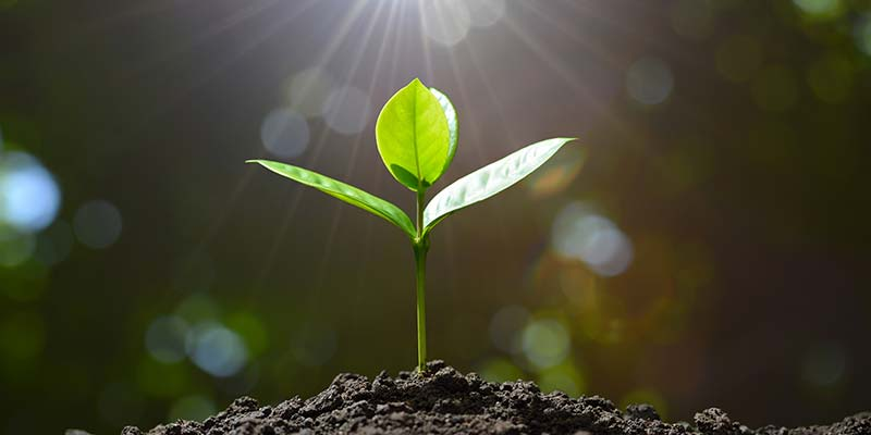 Precision Planting: Four Reasons Why It's Beneficial
