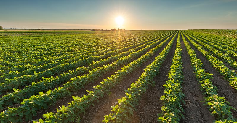 Precision Agriculture: The Five Benefits of Auto Steering